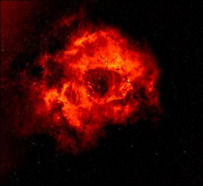 Rosette Nebula Blooms