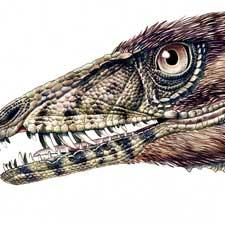 new dinosaur triassic tawa