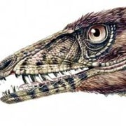 Newly Discovered <i>T. Rex</i> Relative Fleshes Out Early Dino Evolution