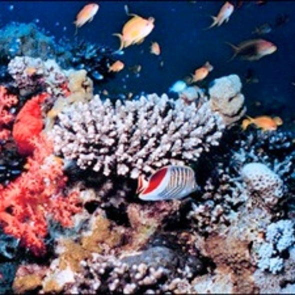 Can Corals Adapt to Climate Change and Ocean Acidification?