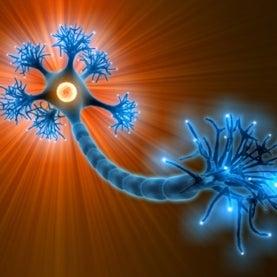 neuron inhibitory brain autism schizophrenia