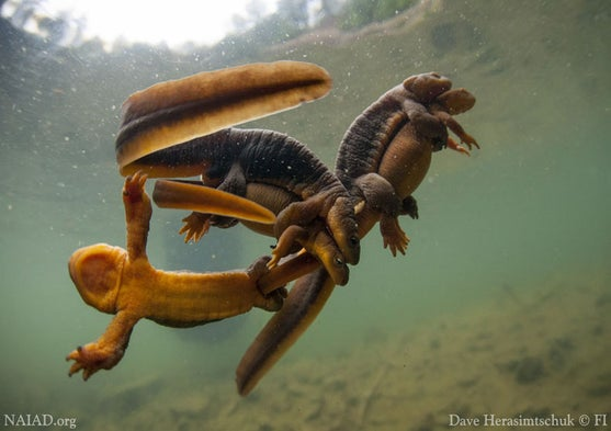 The Surprising Beauty and Biodiversity of Freshwater Fauna [Slide Show]