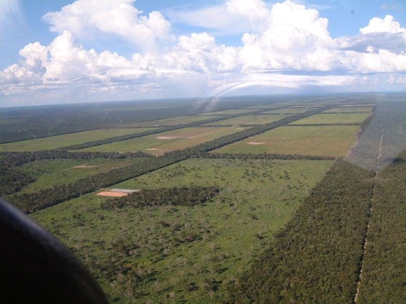 Agribusiness Drives Most Illegal Deforestation