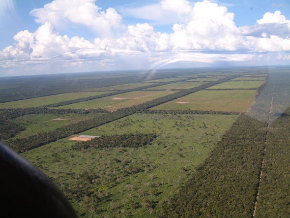 Agribusiness Drives Most Illegal Deforestation