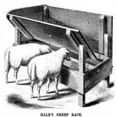 FEEDING THE SHEEP: