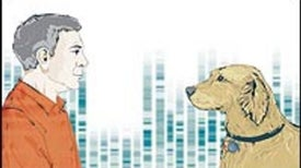Cancer Clues from Pet Dogs