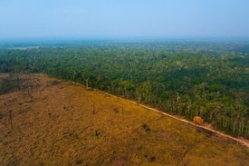 Amazon Deforestation Falls Where Land Is under Indigenous Control
