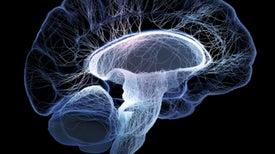 Seeking Cures for Terrible Brain Diseases