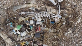 What Is It? Death by Plastic