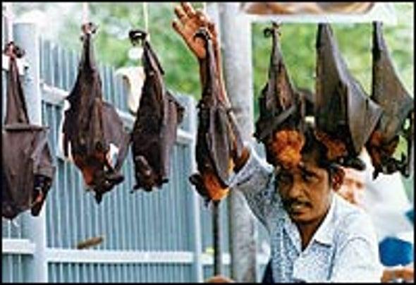 Going to Bat