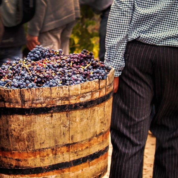 New Method Turns Tons of Wine Waste into Useful Chemicals