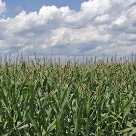 EPA Edges into 15 Percent Ethanol Blend