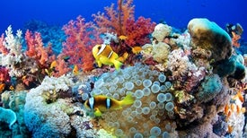 Fishy Trick Lures Life Back to Coral Reefs