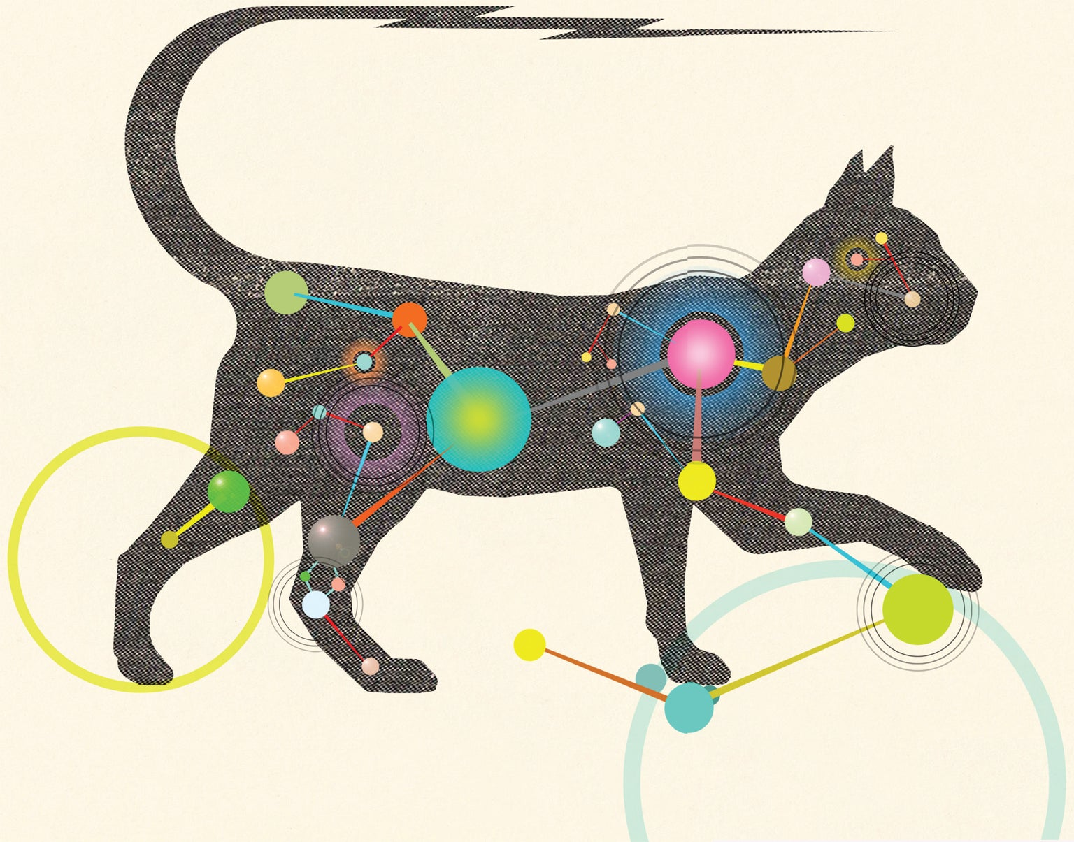 The Inner Life Of Cats Scientific American