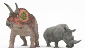 Dinosaurs Might Have Had Warm-Blooded Animals' Fast Metabolism