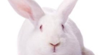 Rabbit Rest: Can Lab-grown Human Skin Replace Animals in Toxicity Testing?