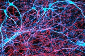 Deeper Insights Emerge into How Memories Form