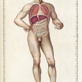 1564: <i>Tabulae anatomicae</i>, by Bartolomeo Eustachi