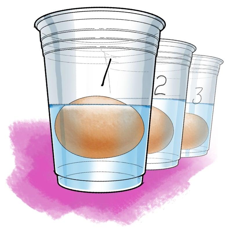Salty Science: Floating Eggs in Water