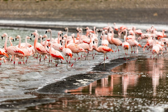 Flamingos Can Be Picky about Company