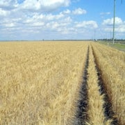 Extreme Weather Helps Drive Food Prices to New Highs