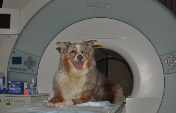 The Dog and Cat Wing: Hospital Sets Up a Scanner Center for Pets