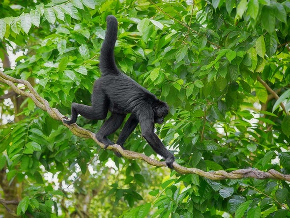 Missing Tropical Animals Could Hasten Climate Change