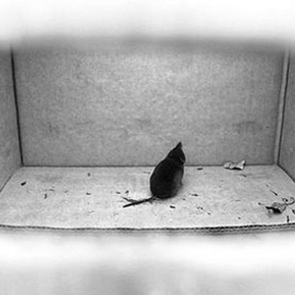Scientists Plant False Memories in Mice--and Mice Buy It