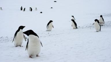 Penguin Populations Are Changing Dramatically