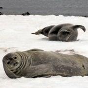 How do marine mammals avoid freezing to death?