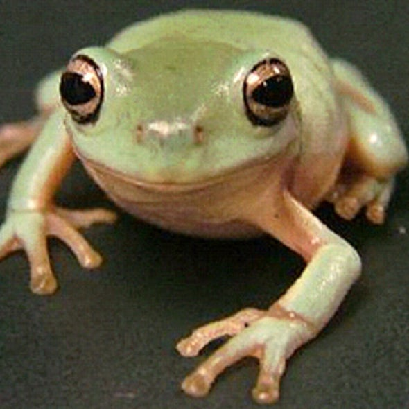 Tree Frog Inspires New Easy-Off Stickies