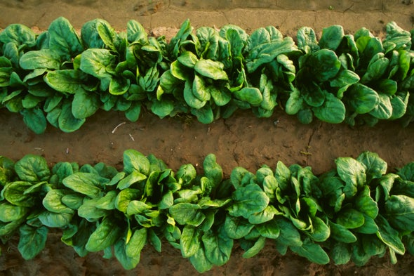 Key Photosynthesis Complex Viewed in Spinach