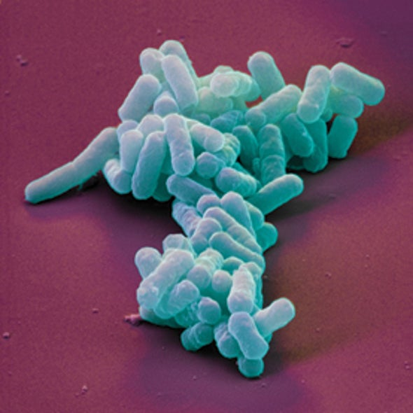"Nice Germs Finish Last: ""Good Samaritan"" Bacteria Provide New Clues in Antibiotic Resistance"
