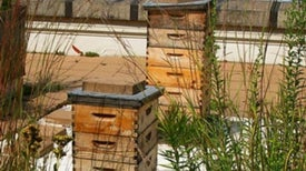 Urban Beekeepers Keep Cities Abuzz with Pollinators