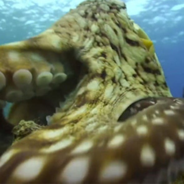 4 Cool Octopus Facts and 1 Awesome Octobot [Video]