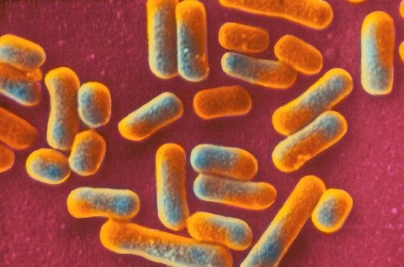 Vaginal Microbe Yields Novel Antibiotic