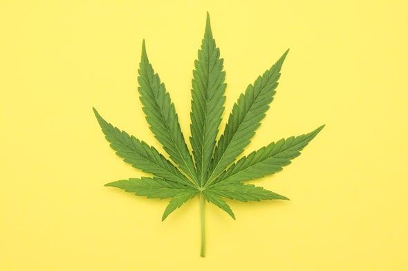 Where Marijuana Is Legal, Opioid Prescriptions Fall