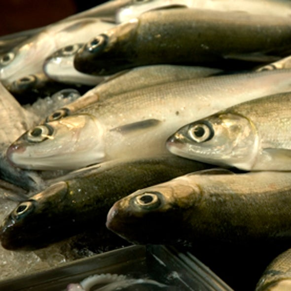 """""""Catch Shares"""" Save Fish Populations--and the Fishing Industry"""