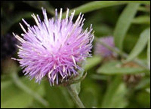 Secret of Invasive Plants¿ Success Lies in the Soil