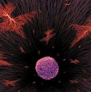 A Shot against Cancer