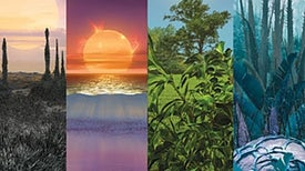 The Color of Plants on Other Worlds