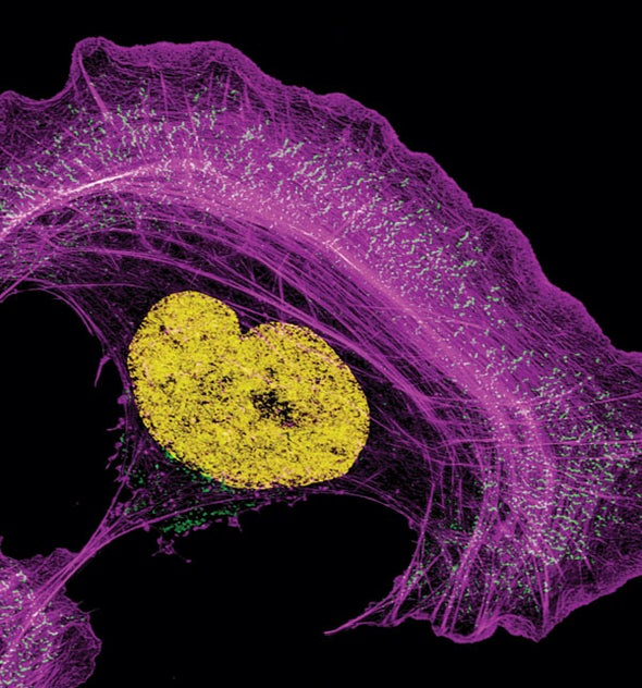 Stunning Images from the 2014 Olympus BioScapes International Digital Imaging Competition [Slideshow]