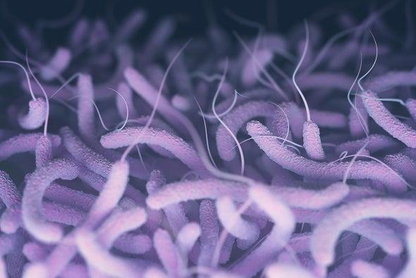 WHO Plans Global War on Cholera as Yemen Caseload Soars