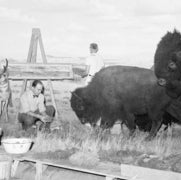 AMERICAN BISON CONSTRUCTION