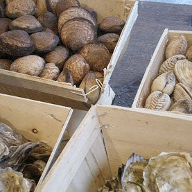 Ocean Acidification Threatens Global Fisheries