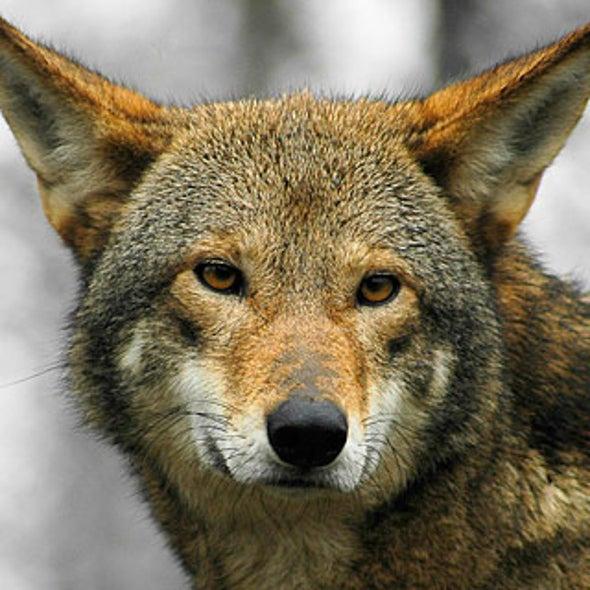 How Do Zoos Help Endangered Animals Scientific American