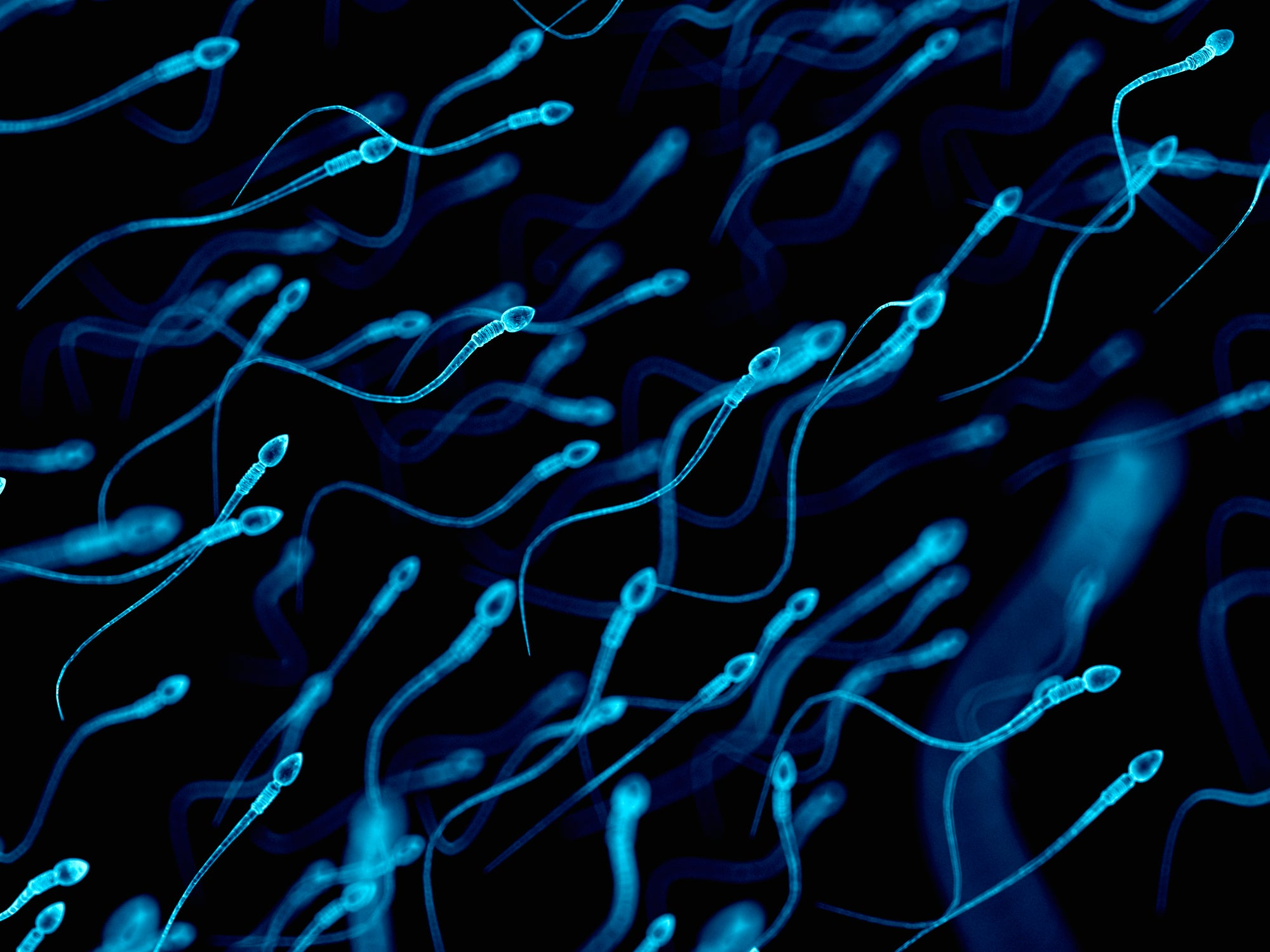 Consumer Dna Tests Negate Sperm Bank Donor Anonymity Scientific American
