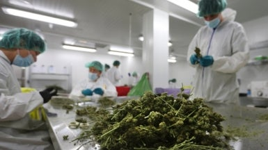 A New Era in Medical Marijuana Research?
