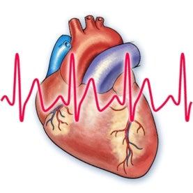 heart, pulse