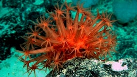 Just How Little Do We Know about the Ocean Floor?